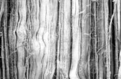Chiropractic Portland OR Graston Technique Scar Tissue 1